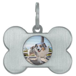 Bennett - Aussie Mini - Rosie - Carmel Beach Pet Name Tag