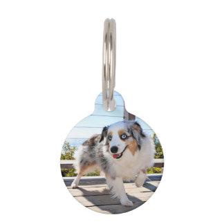 Bennett - Aussie Mini - Rosie - Carmel Beach Pet Tag