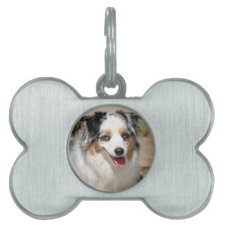 Bennett - Aussie Mini - Rosie - Carmel Beach Pet Tag