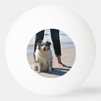 Bennett - Aussie Mini - Rosie - Carmel Beach Ping Pong Ball