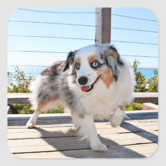 Bennett - Aussie Mini - Rosie - Carmel Beach Square Sticker