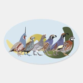 BennuBirdy Quail of North America (no text) Oval Sticker