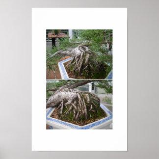 bent bonsai poster