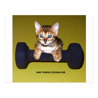Bental Kitten with Dumbbell Yellow Postcard
