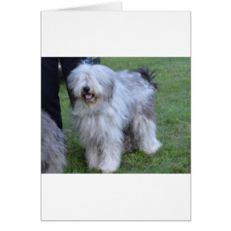 Bergamasco Shepherd Dog Card