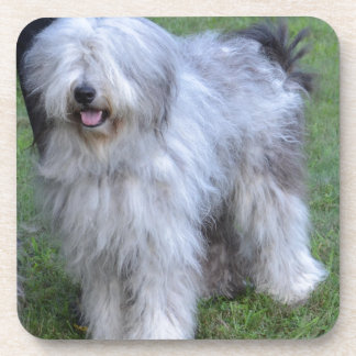 Bergamasco Shepherd Dog Coaster