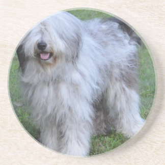 Bergamasco Shepherd Dog Coasters