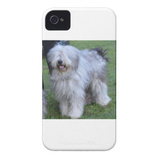 Bergamasco Shepherd Dog iPhone 4 Case-Mate Case