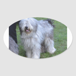 Bergamasco Shepherd Dog Oval Sticker