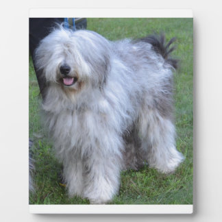 Bergamasco Shepherd Dog Plaques