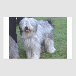Bergamasco Shepherd Dog Sticker