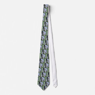 Bergamasco Shepherd Dog Tie