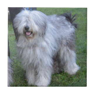Bergamasco Shepherd Dog Tile