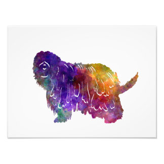 Bergamasco Shepherd in watercolor Photo Print