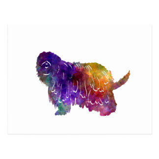 Bergamasco Shepherd in watercolor Postcard