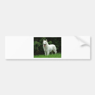 Berger Blanc Suisse Dog Bumper Sticker