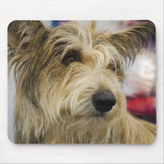 Berger Picard Dog  Mouse Pad