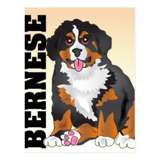Bermese Mountain Dog Post Cards