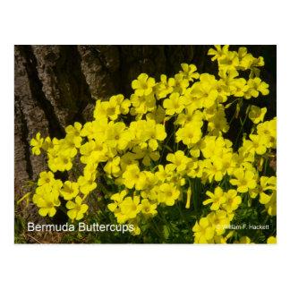 Bermuda Buttercup Sunset SB California Products Postcard
