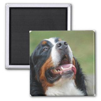 Berner Sennenhund Dog Magnet