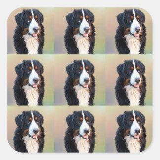 Berner Sennenhund Square Sticker