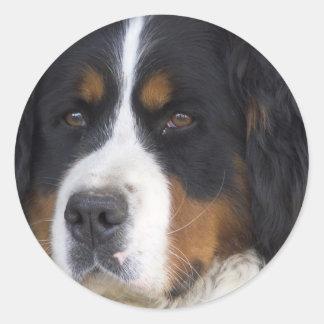 Berner Sennenhund Sticker