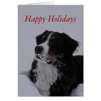berner with beard christmas card