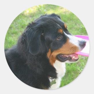 Berner with Frisbee Round Sticker