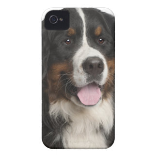 Bernese Mountain Dog (1 year old) Case-Mate iPhone 4 Case