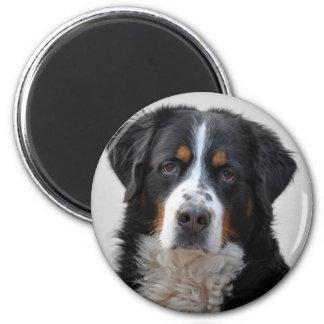 Bernese Mountain dog beautiful photo, gift Magnet
