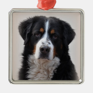 Bernese Mountain dog beautiful photo, gift Silver-Colored Square Ornament