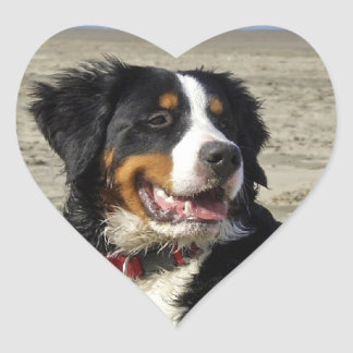 Bernese Mountain dog beautiful photo heart sticker