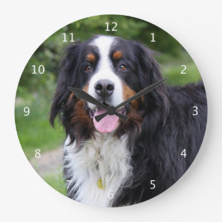 Bernese Mountain dog beautiful photo portrait Large Clock