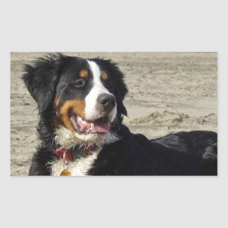 Bernese Mountain dog beautiful rectangle stickers