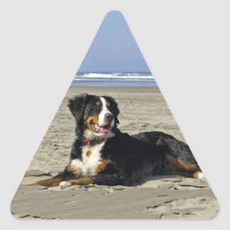 Bernese Mountain dog beautiful triangle stickers