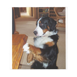bernese-mountain-dog-begging notepad