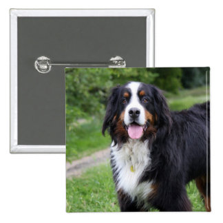 Bernese Mountain dog button, pin, gift idea 2 Inch Square Button
