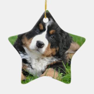 Bernese Mountain Dog Ceramic Star Ornament