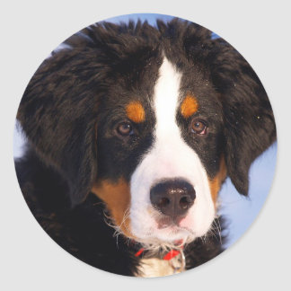 Bernese Mountain Dog Classic Round Sticker