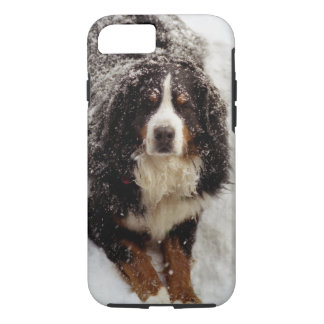 Bernese Mountain Dog in Snow Storm iPhone 8/7 Case