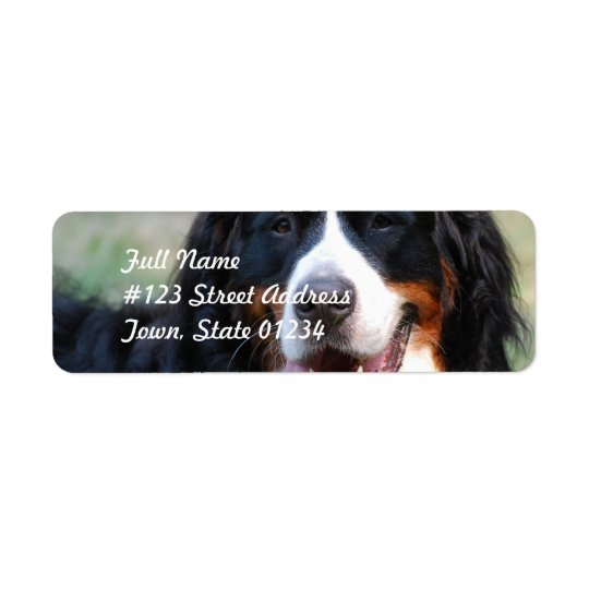 Bernese Mountain Dog Label Return Address Label