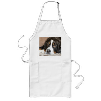 bernese mountain dog laying long apron