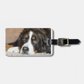 bernese mountain dog laying luggage tag