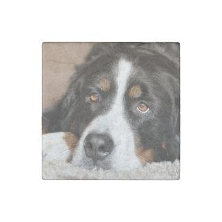 bernese mountain dog laying stone magnets