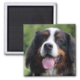 Bernese Mountain dog magnet, gift idea Magnet