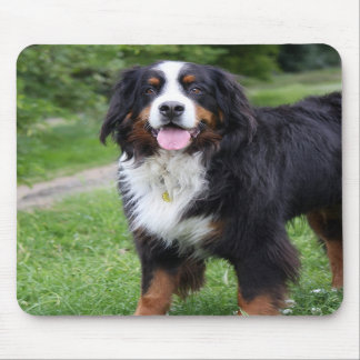 Bernese Mountain dog mousepad, gift idea Mouse Pad
