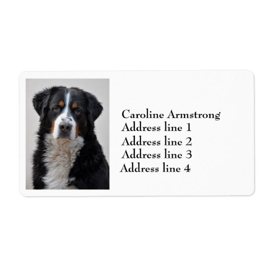 Bernese Mountain dog photo custom address labels