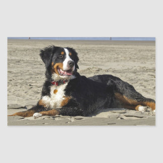Bernese Mountain dog photo rectangle stickers