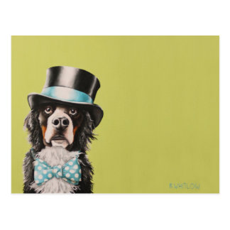 Bernese Mountain Dog Postcard - Toben