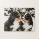 Bernese Mountain Dog Puppets Sniff Each Other Jigsaw Puzzle